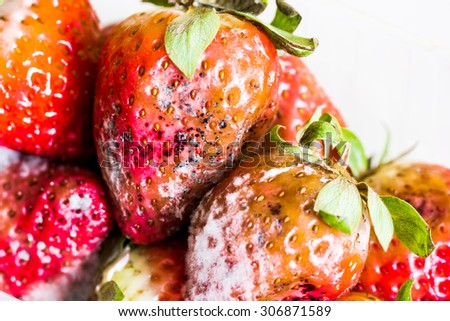 strawberry with mold fungus no longer suitable for consumption - stock photo