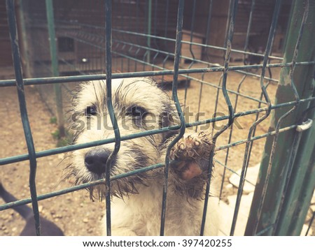 stray abandoned puppy in shelter, sad puppy eyes  - stock photo