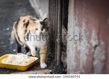 Stray cat and box with food - stock photo