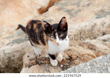 Stray cat black and brown looking at the camera - stock photo