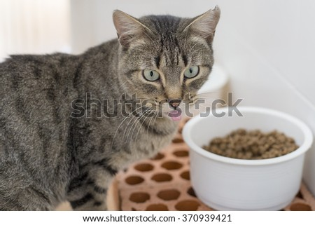 Stray cat eating - stock photo