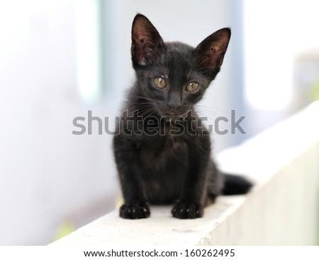 Stray Cat family - stock photo