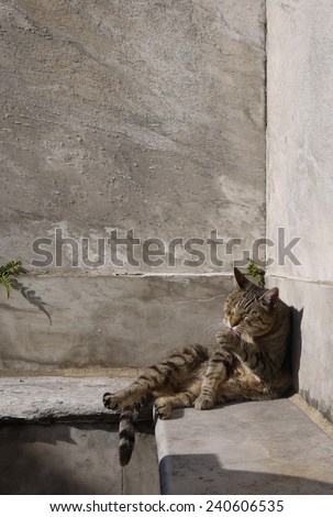 Stray Cat Grooming in Warm Sunlight, La Recoleta Cemetery, Buenos Aires, Argentina - stock photo