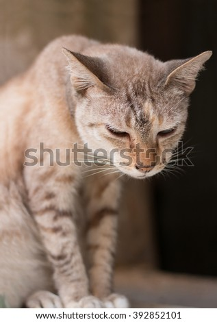 Stray cat living in an abandoned house. - stock photo