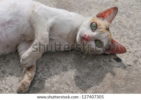 Stray Cat Lying in the Street - stock photo