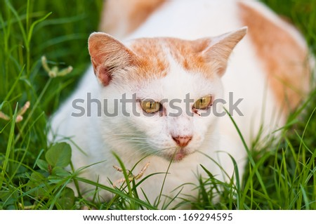 stray cat lying on the grass  in public park - stock photo