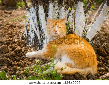 Stray cat resting near a tree. Selective focus.  - stock photo