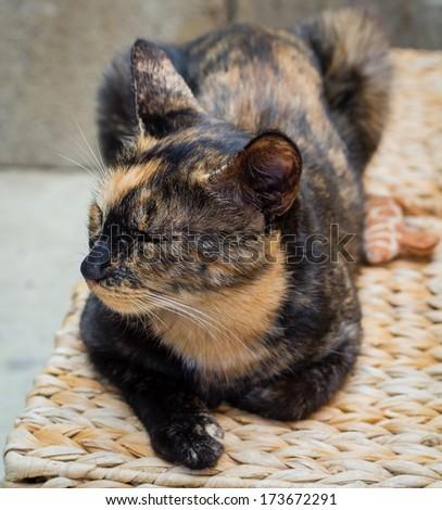 Stray cat resting on a basket.  - stock photo
