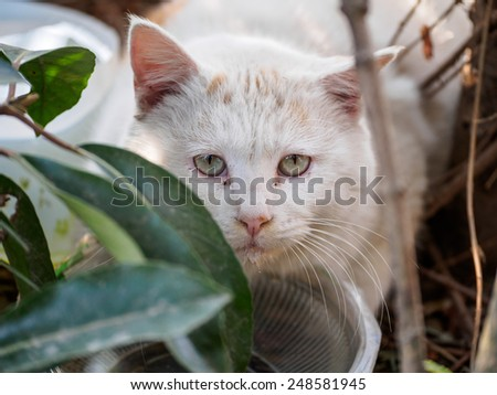 stray cat with yellow eyes in noon - stock photo