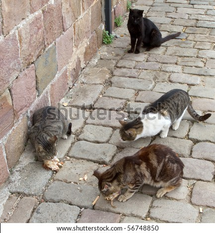 Stray cats eating scraps of chicken on a cobblestone street