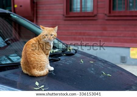 Stray cats on the car - stock photo