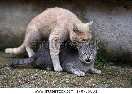 Stray cats on top of each other. - stock photo
