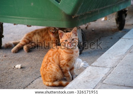 Stray cats or street cats near garbage container. One of them under the garbage container and the other one looks at the camera. - stock photo