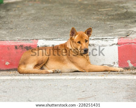 Stray dog. - stock photo
