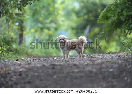 Stray Dog - stock photo