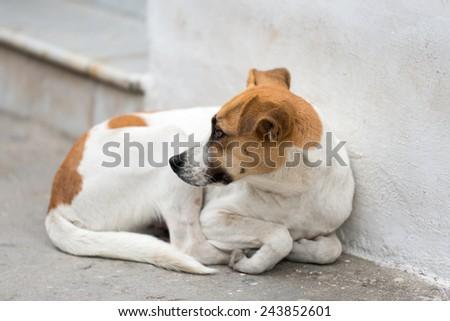 Stray dog abandoned on the street - stock photo