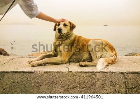 Stray dog and a young woman near the sea - stock photo