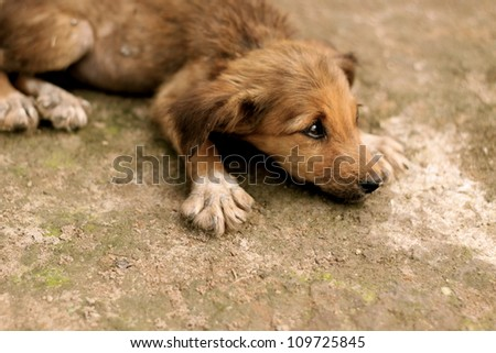 Stray dog in Suriname - stock photo