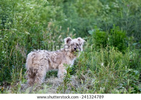 Stray dog in the nature looking at the camera  - stock photo