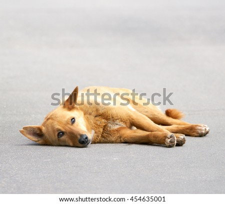 Stray dog lying on the road