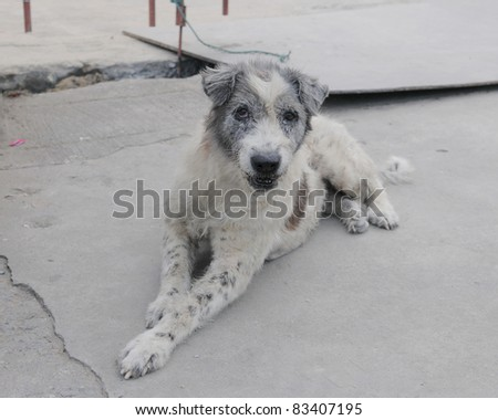 Stray Dog on a Bangkok Street - stock photo