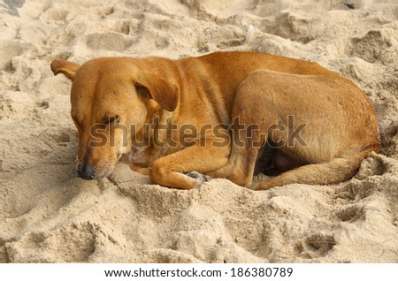 stray dog sleeping on the beach.