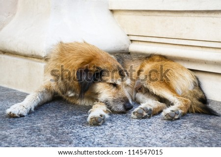 Stray dog sleeping on the steps of a building. - stock photo