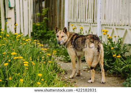 Stray dog winks outdoor in summer - stock photo