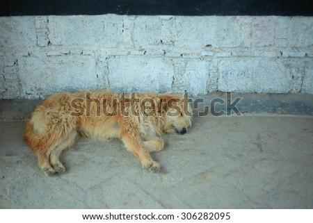 Stray dogs sleeping - stock photo