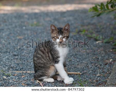 Stray kitten - stock photo