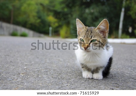 Stray kitten sitting on the ground, it looks sad - stock photo