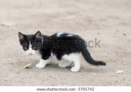 stray kitten walks over ground, searching for food - stock photo