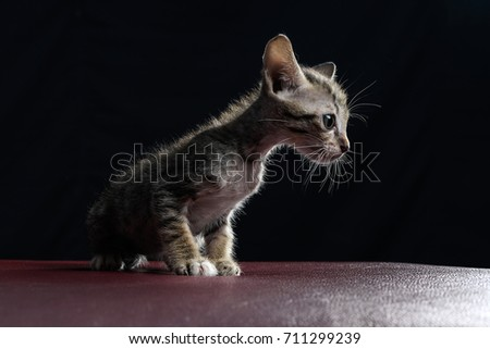 Stray kitty isolated with black background, Shooting in studio.