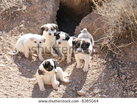 Stray puppies hiding in the burrow - stock photo