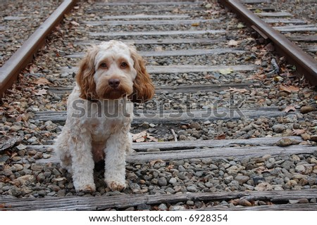 stray puppy stare - stock photo