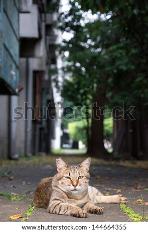 Stray tabby cat lay on ground in the street. - stock photo