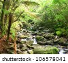 Stream among New Zealand native bush - stock photo