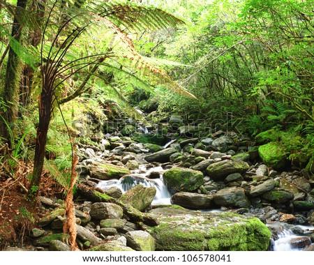 Stream among New Zealand native bush - stock photo