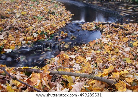 Stream and autumn leaves - long exposure