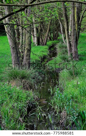 Stream at  Newmillerdam Wood near Wakefield West Yorkshire England UK