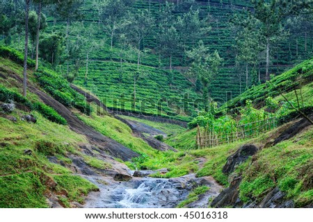 Stream between the hills where growing of tea
