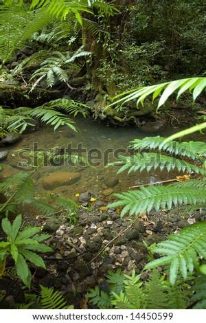stream crossing on a hiking trail - Oahu, Hawaii - stock photo