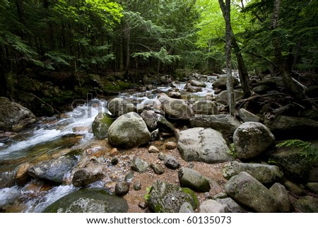 Stream emerging from a lush green forest