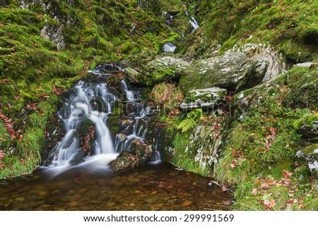 Stream falling through moss and trees, Autumn Fall. United Kingdom, Europe. - stock photo