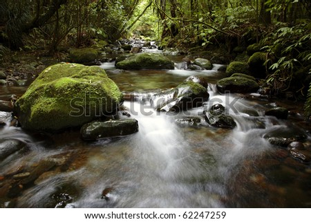 Stream flowing in lush New Zealand tropical forest - stock photo