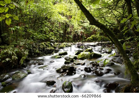Stream flowing in lush tropical forest - stock photo