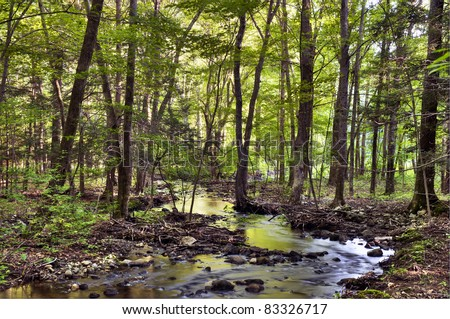 Stream flowing through a forest in Connecticut