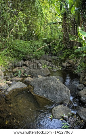 stream flowing through the Nature Center in makiki valley, Oahu, Hawaii - stock photo