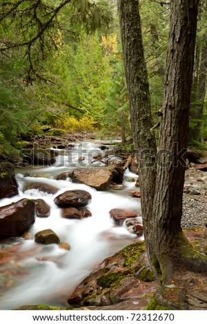 Stream Flowing Through Woods - stock photo