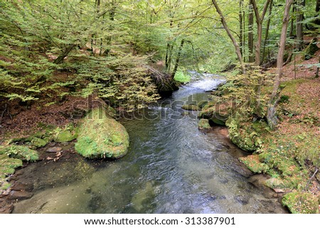 Stream in a forest - stock photo